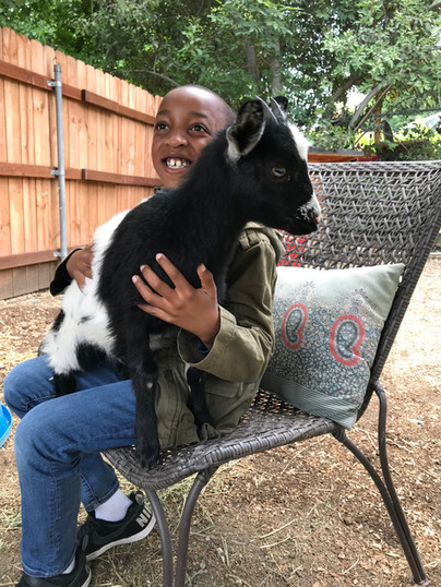 Tennesse Fainting Goat Love
