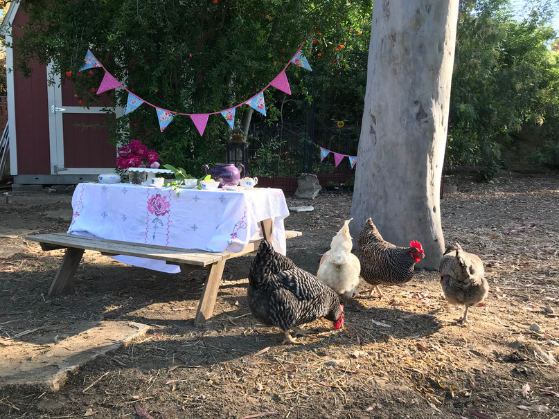 The chickens are always crashing our parties!
