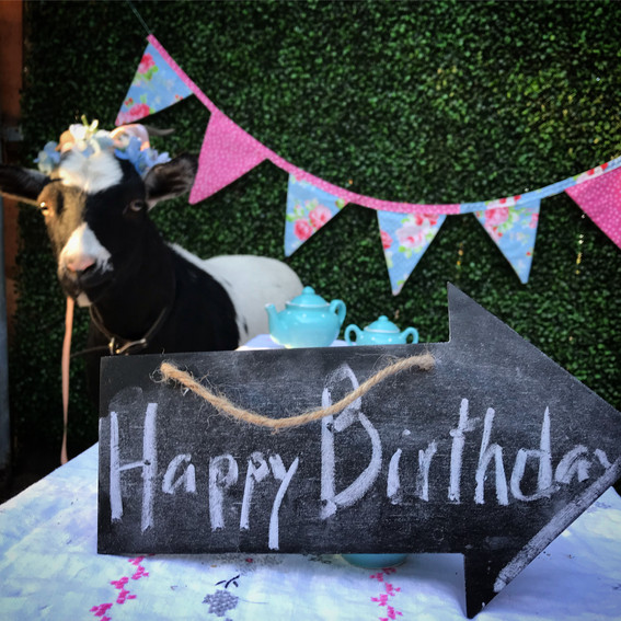 Birthday parties are so fun when you add goats!