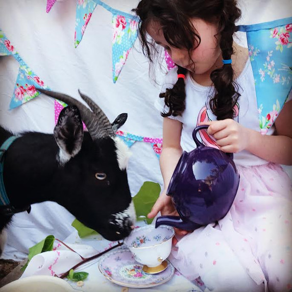 Tea Party with Goats!