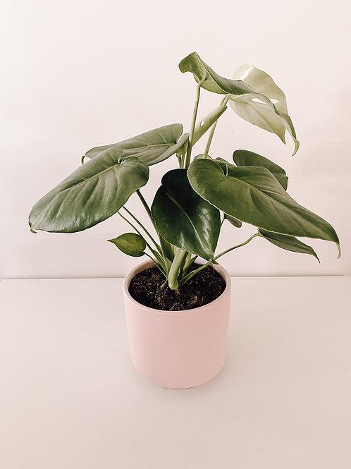 plants delivered taree