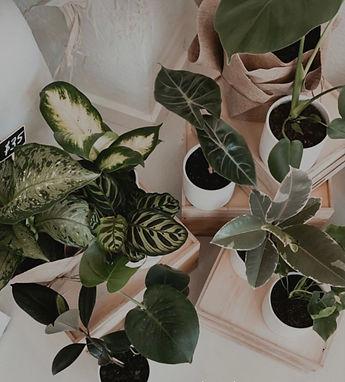 plants online taree florist.jpg