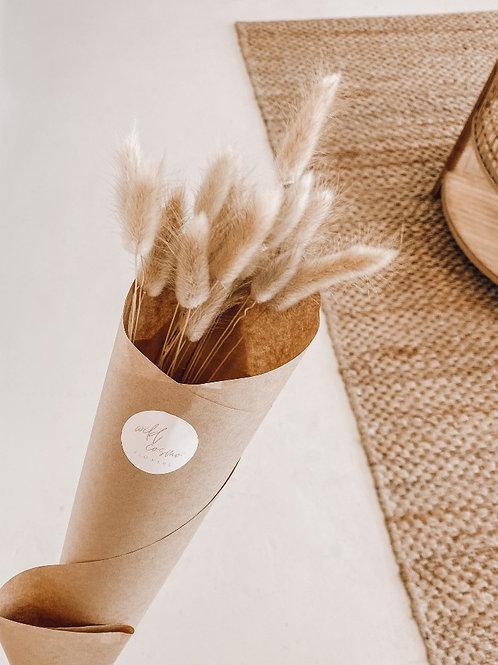 Dried Bunny Tails | Taree Florist