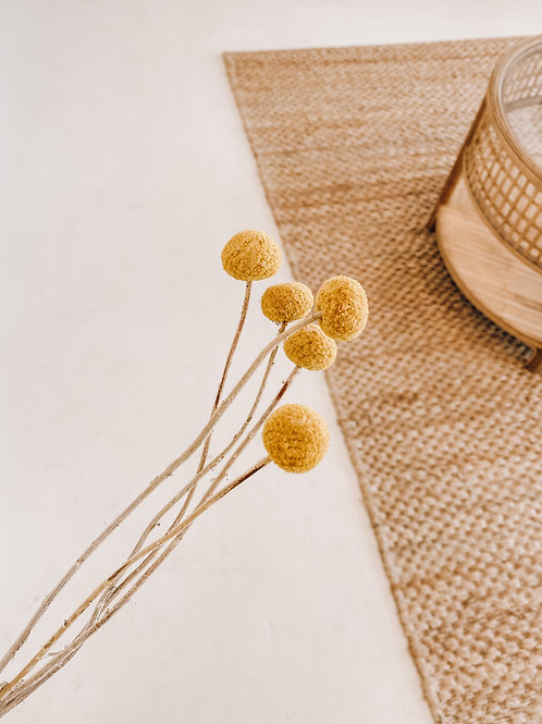 Dried Billy Buttons | Taree Florist