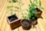 Morenga Stevia Ginger Turmeric_edited.jp