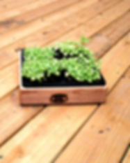 Microgreen Basil Use It_edited_edited.jp