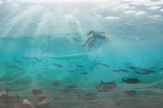 School Surf and Snorkel