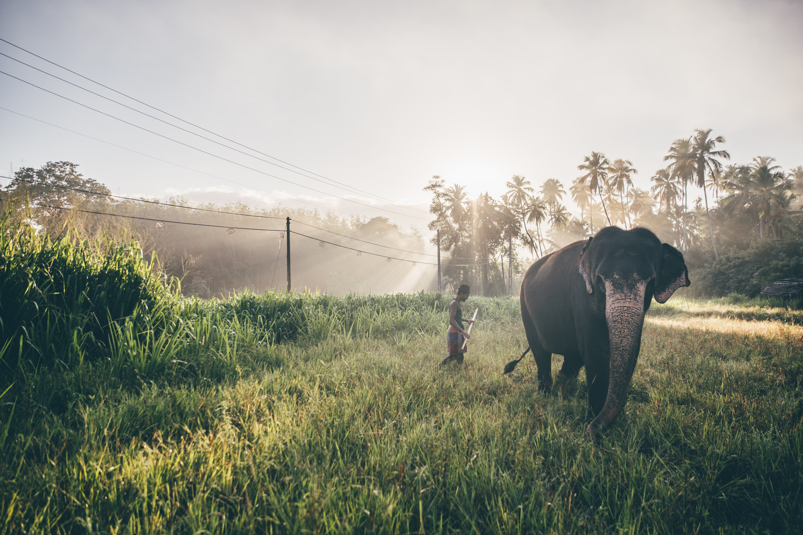 Elephant_Foundation_Sri_Lanka_2019_29.jp