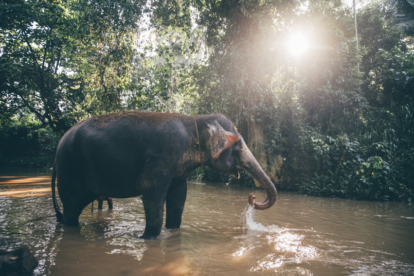 Elephant_Foundation_Sri_Lanka_2019_59.jp