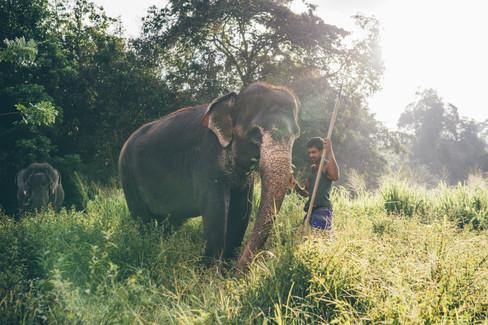 Elephant_Foundation_Sri_Lanka_2019_1.jpg