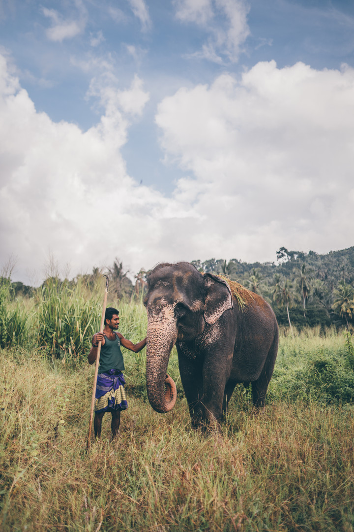 Elephant_Foundation_Sri_Lanka_2019_18.jp