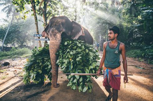 Elephant_Foundation_Sri_Lanka_2019_54.jp