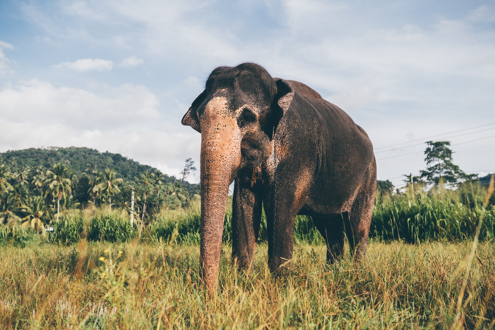 Elephant_Foundation_Sri_Lanka_2019_13.jp