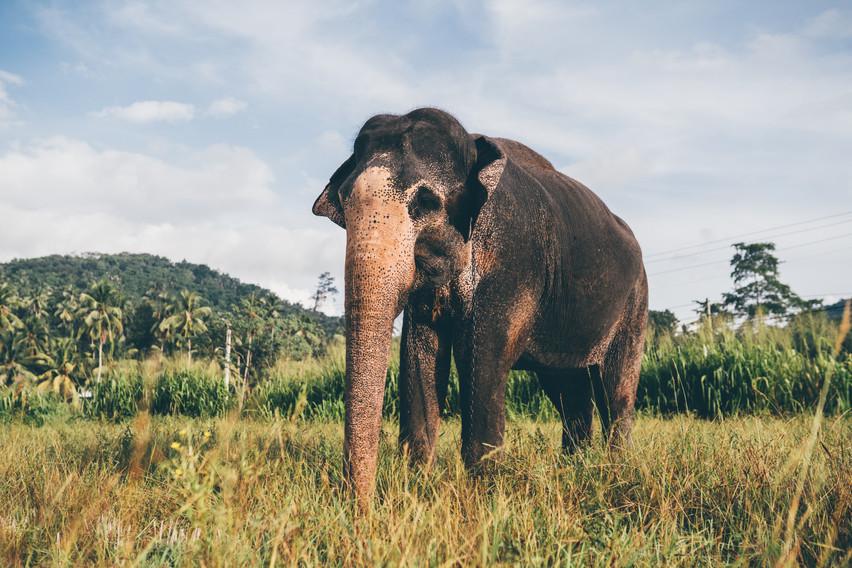 Elephant_Foundation_Sri_Lanka_2019_13.jp