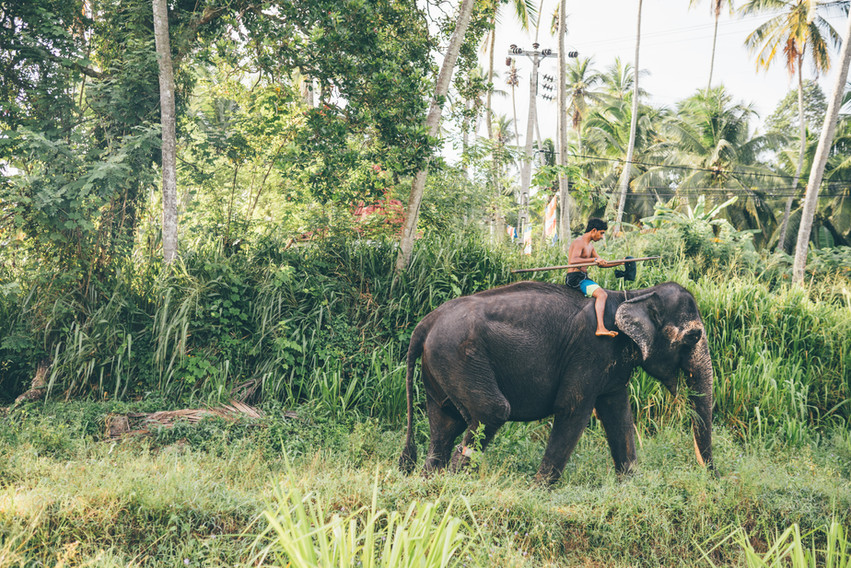 Elephant_Foundation_Sri_Lanka_2019_8.jpg
