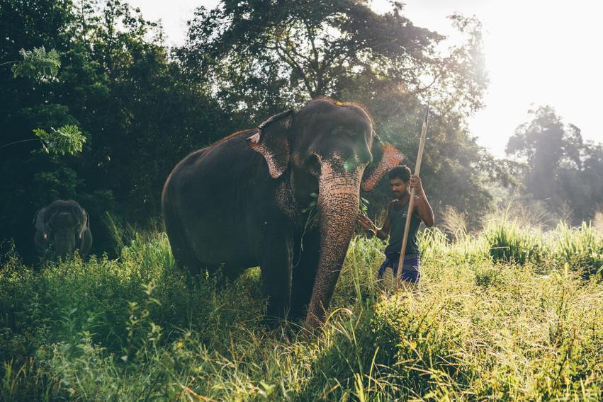 Elephant_Foundation_Sri_Lanka_2019_3.jpg