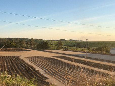 Mogiana - Erntebeginn - Angebotsliste Mai