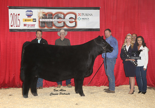 SB Made Rite 304 NCC Champion Angus