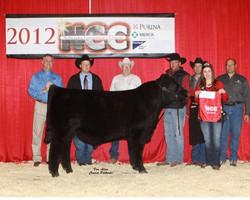 2012 GC Angus bull NCC