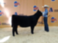 2019 Nebraska State Fair Calf Champion S