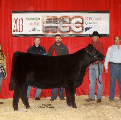 SB 206 NCC RGC Angus heifer 2013 NC