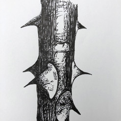 botanical monochrome 34.jpg