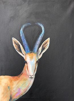 Animal springbok Kwa Zulu Natal.JPG