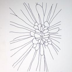 botanical monochrome 13.jpg