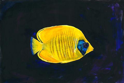animal fish 4.jpeg