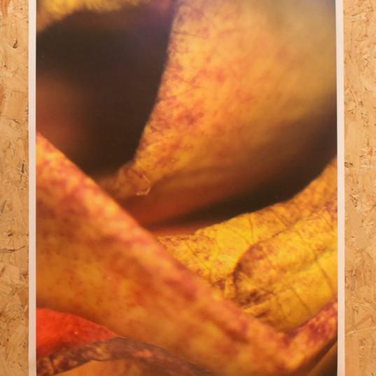 Botanical Flesh 2.jpg