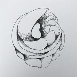 botanical monochrome 24.jpg