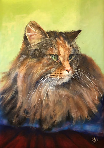 Animal cat.JPG