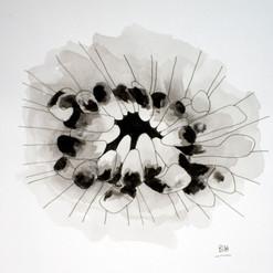 botanical monochrome 20.jpg