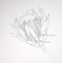 botanical monochrome 14.jpg