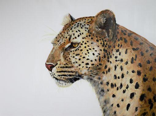 animal leopard 1.jpg