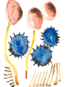 Botanical Flesh Watercolour 9.jpeg