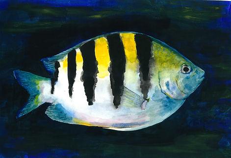 animal fish 1.jpeg