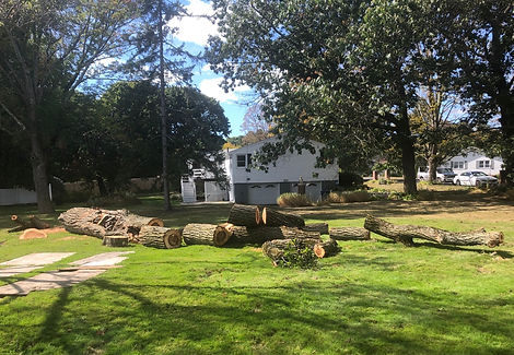 Logs ready to be hauled away