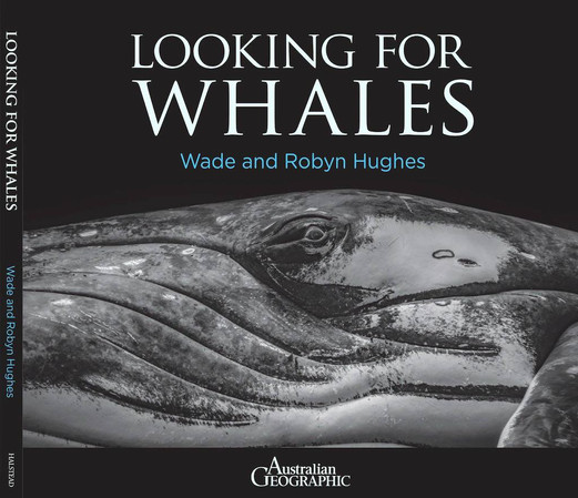Looking For Whales by Wade & Robyn Hughes