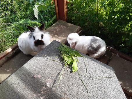 Unsere Sonnenwiese in den Sommerferien!
