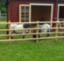 Pferde_edited.jpg