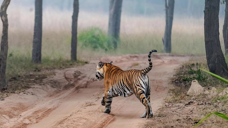 Visit to Bandhavgarh National Park in Northern India