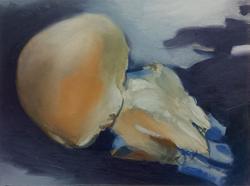 Qualle, 2006