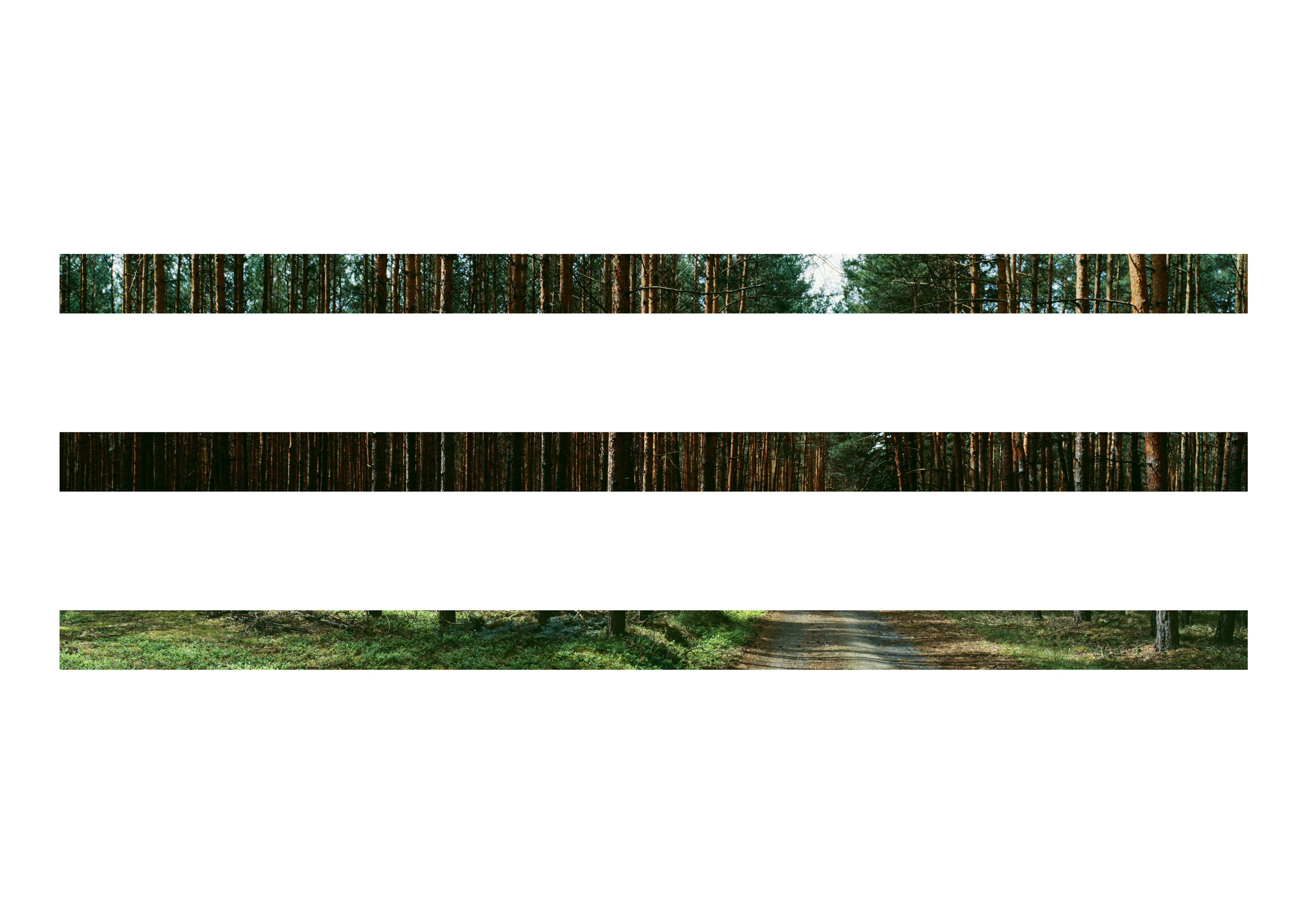 OST Wald, 2007