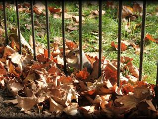 Wie ein Eichhörnchen zur Gefahr werden kann!