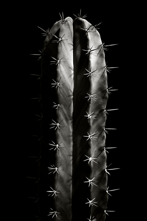 Naked Cacti : C2