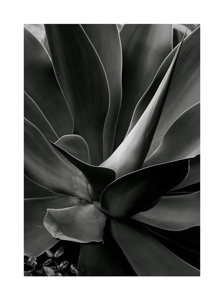Naked Cacti