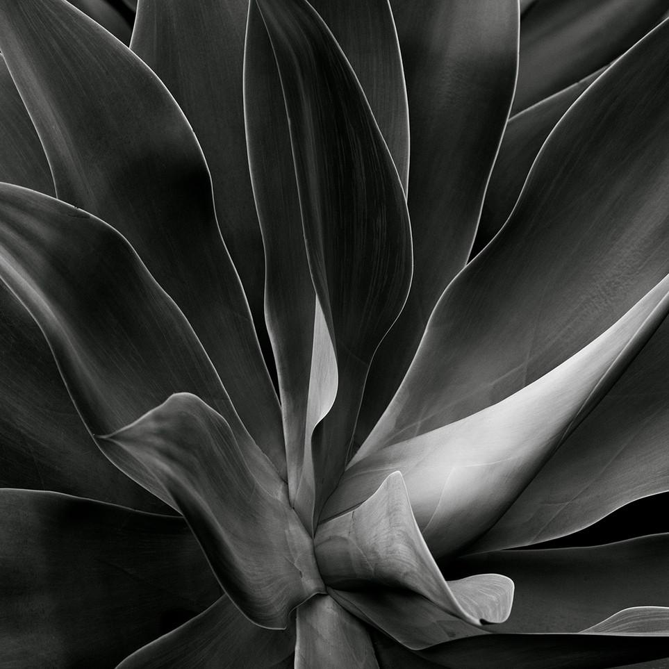 Naked Cacti - C