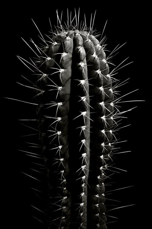 Naked Cacti : C1
