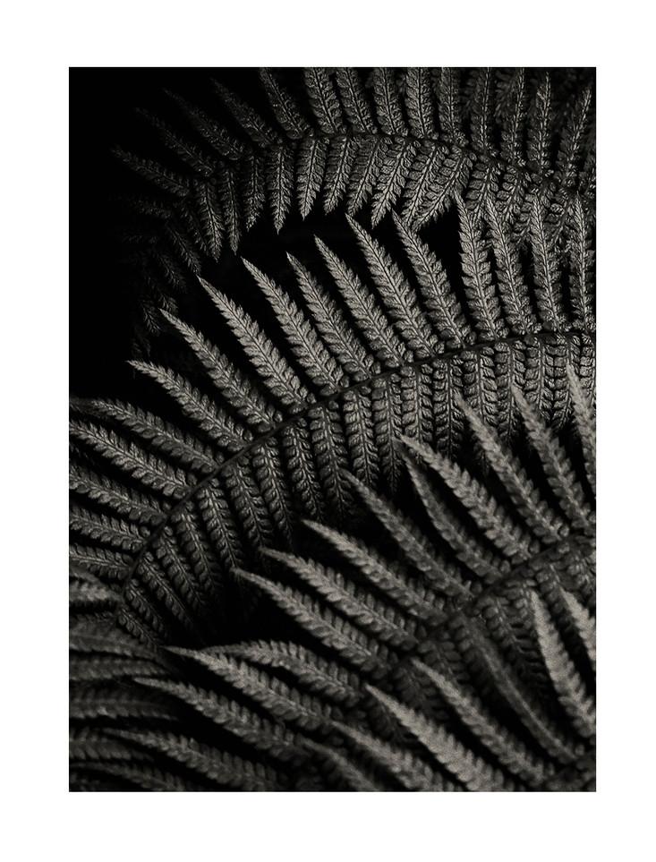 Naked Cacti : C